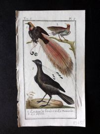 Buffon 1785 Antque Hand Colored Bird Print. Birds of Paradise 5-5